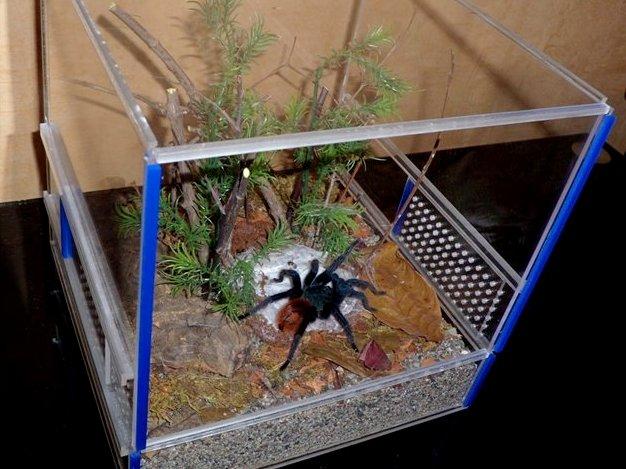 Уход за пауком в домашних условиях